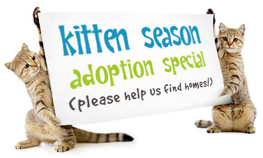 Kitten Adoption Birthmother Emotional Landmind